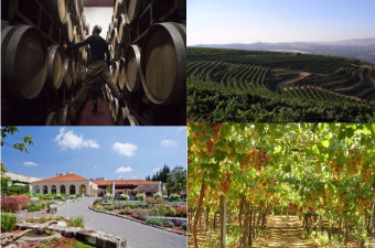 Wineries Tours in Israel